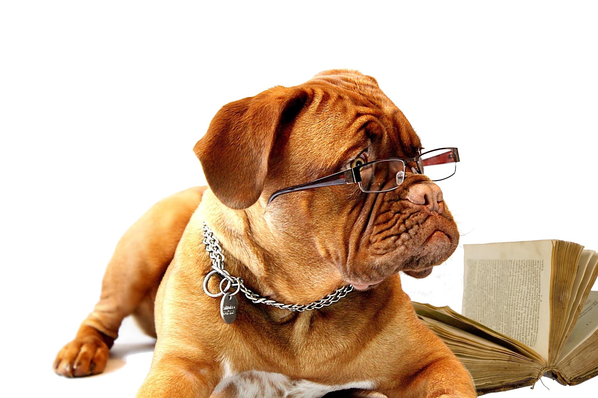 actualités conseils prévention formation accompagnement