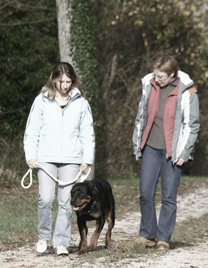 Formation Permis de détention chiens catégorisés