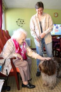 Zoothérapie chien - éducagil - 9