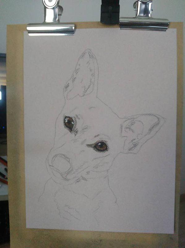 portrait animalier ébauche chien