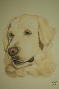 Portrait animalier chien