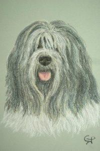 Portrait Schapendoes pastels