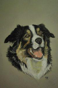 Portrait animalier chien éducagil