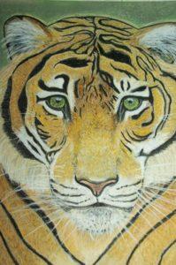 Portrait animalier tigre
