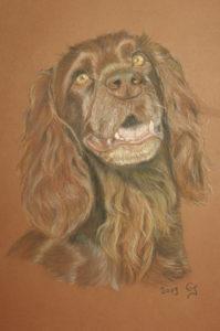 portrait animalier Candice Jouquand