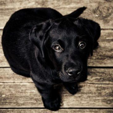 Choisir un élevage de chiens