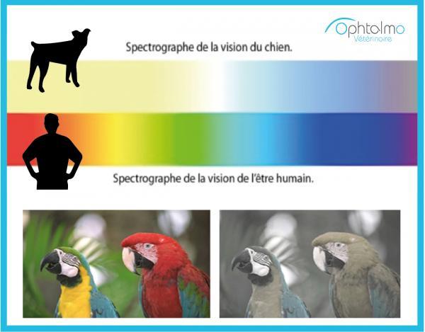 la vision des couleurs