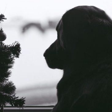 Noël avec un chien, quelques précautions