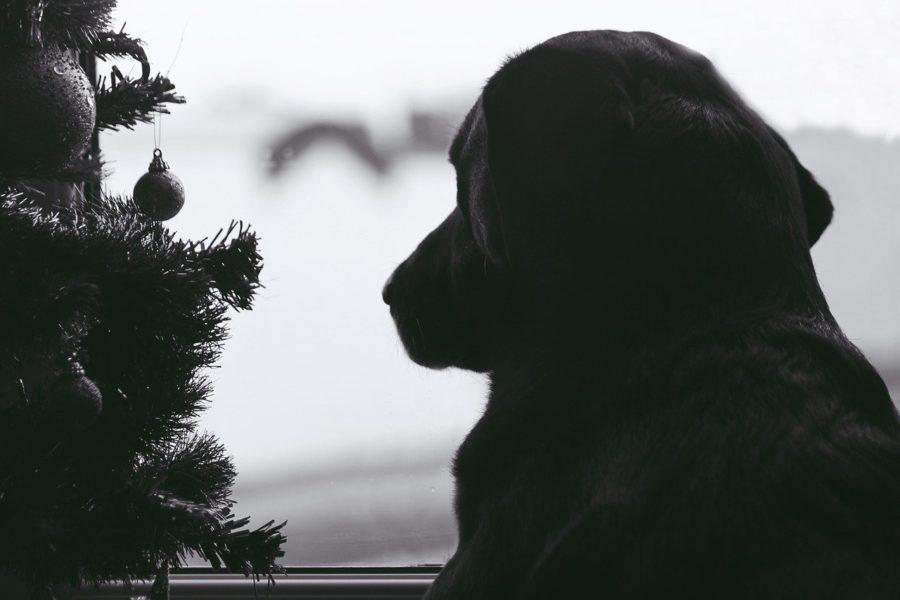 Noël pour les chiens