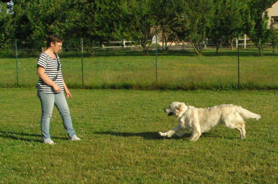 Le rappel, éducation canine, Ballots