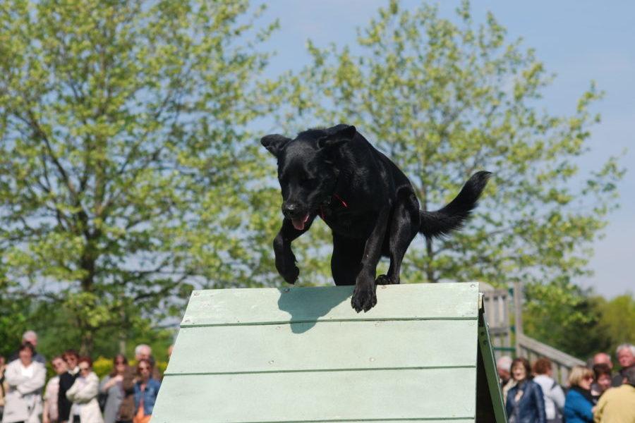 agilité chien, sport canin, entre St Poix (53) et La Guerche de Bretagne