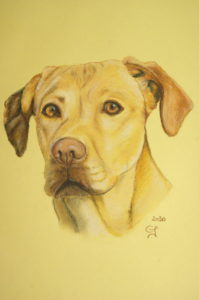 portrait animalier, dessin, pastel sec, Craon