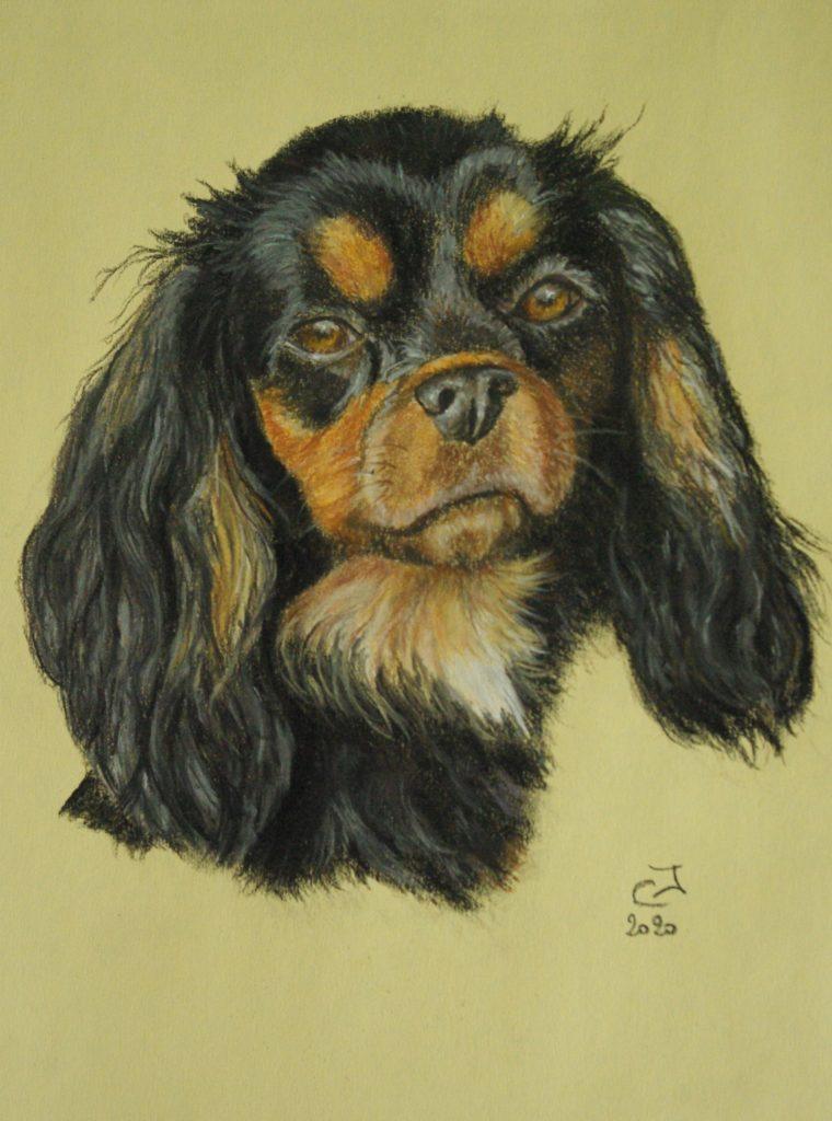 portrait animlalier, art animalier