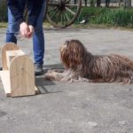 jeu intelligent pour chiens