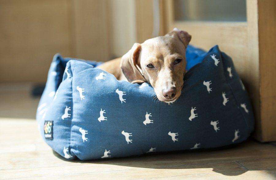 Respectez le repos de votre chien dans son couchage