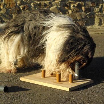 jeux de stimulation intellectuelle pour chiens