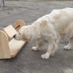 stimulation intellectuelle pour chiens