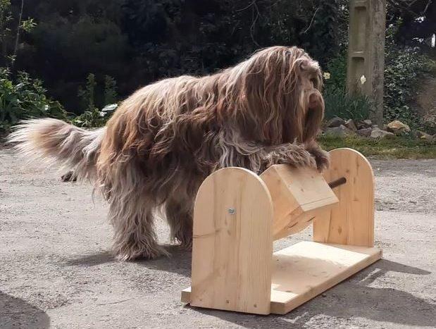 jeu intelligent pour chien