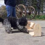 jeu de stimulation pou chien