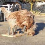 jeux de stimulation pour chien