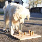 jeu de réflexion pour chien