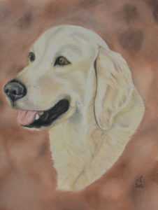 dessin golden retriever