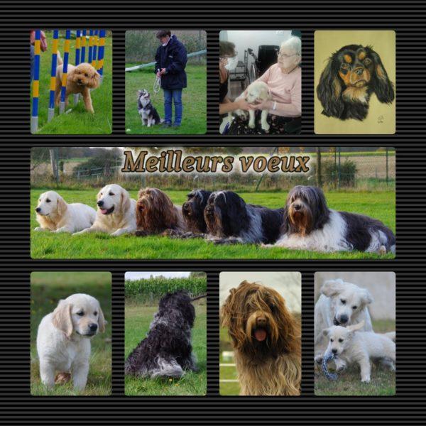 Educagil, éducation canine, agility dog, Craon, Pouancé Renazé, Retiers, Meilleurs voeux